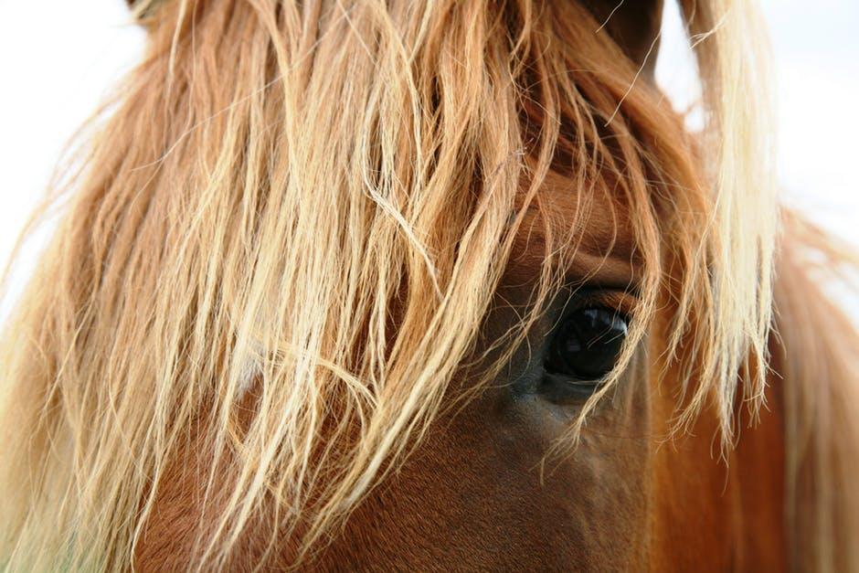 disagio+del+cavallo+point